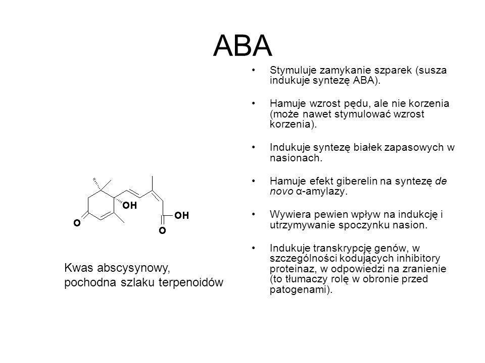 ABA Kwas abscysynowy, pochodna szlaku terpenoidów