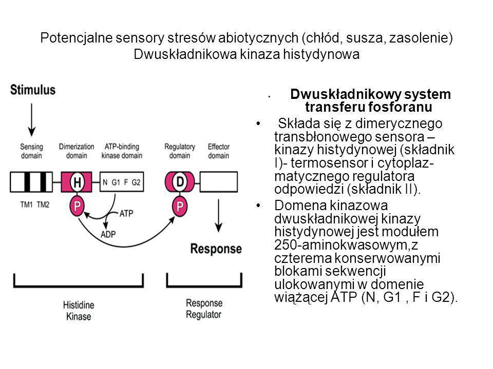 Dwuskładnikowy system transferu fosforanu