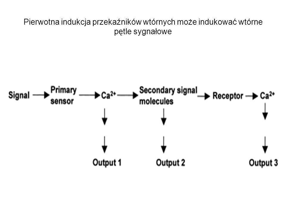 Pierwotna indukcja przekaźników wtórnych może indukować wtórne pętle sygnałowe
