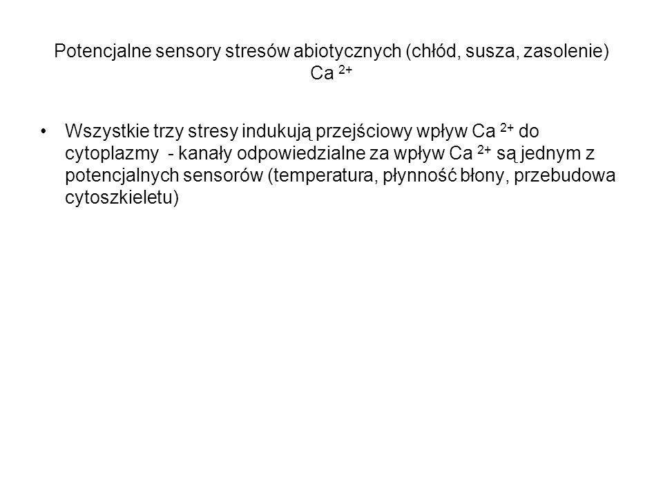 Potencjalne sensory stresów abiotycznych (chłód, susza, zasolenie) Ca 2+