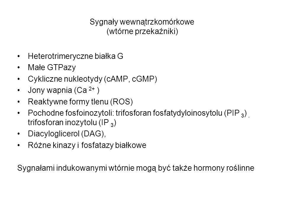 Sygnały wewnątrzkomórkowe (wtórne przekaźniki)