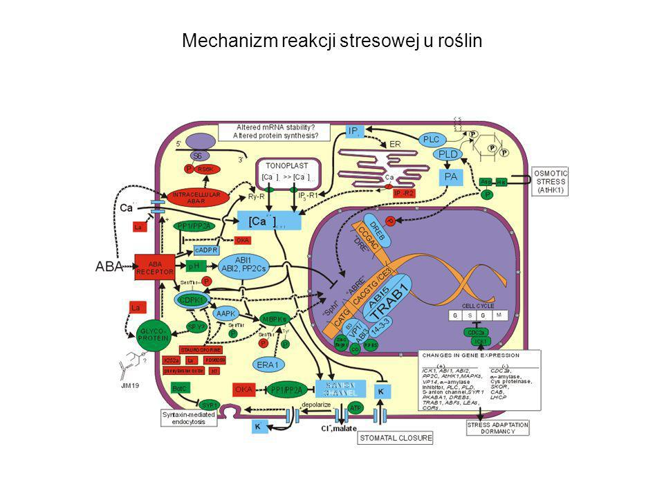 Mechanizm reakcji stresowej u roślin