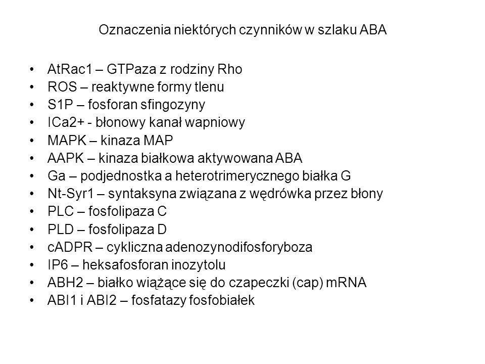Oznaczenia niektórych czynników w szlaku ABA