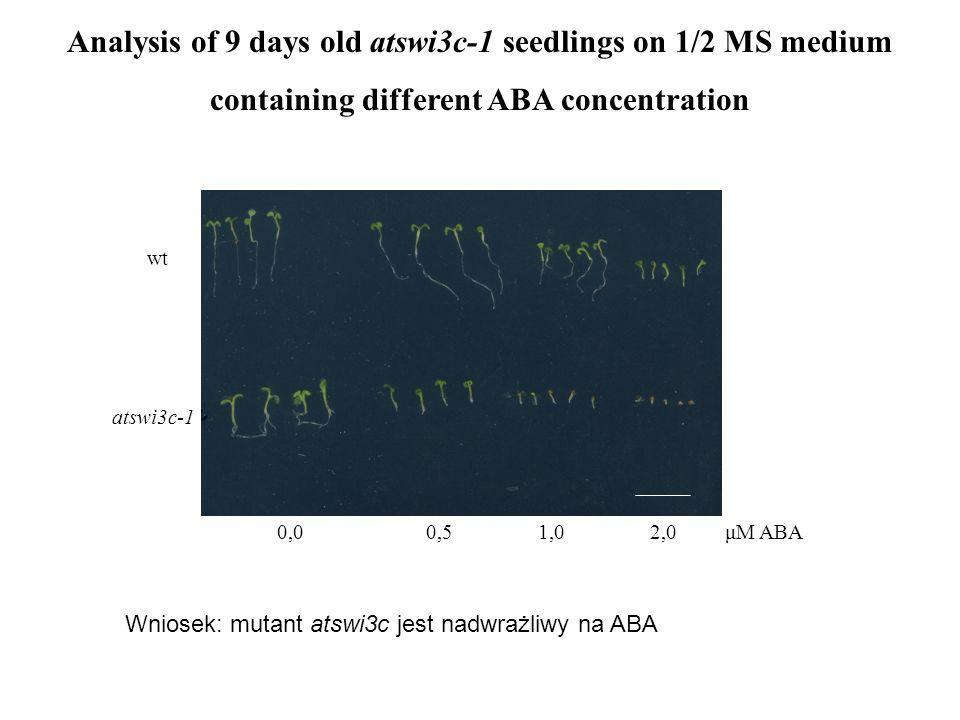Analysis of 9 days old atswi3c-1 seedlings on 1/2 MS medium