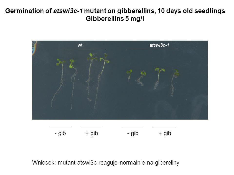 Germination of atswi3c-1 mutant on gibberellins, 10 days old seedlings