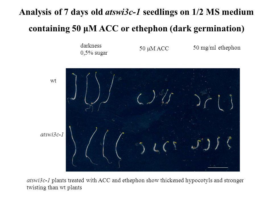 Analysis of 7 days old atswi3c-1 seedlings on 1/2 MS medium