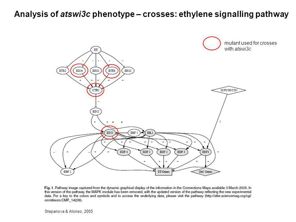Analysis of atswi3c phenotype – crosses: ethylene signalling pathway