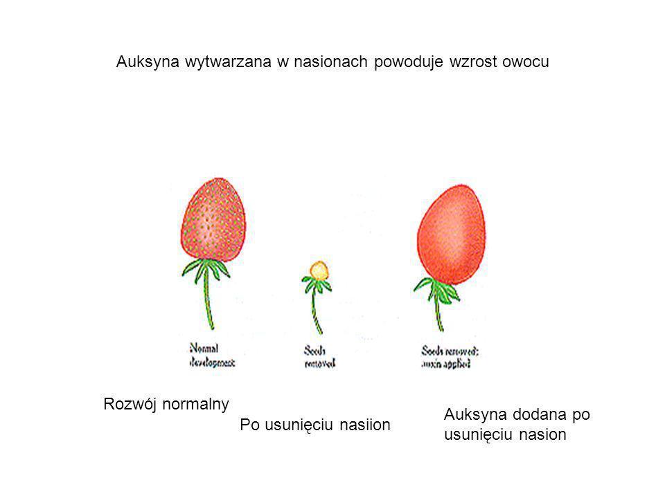 Auksyna wytwarzana w nasionach powoduje wzrost owocu