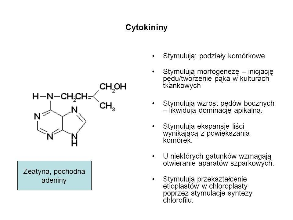 Cytokininy Stymulują: podziały komórkowe