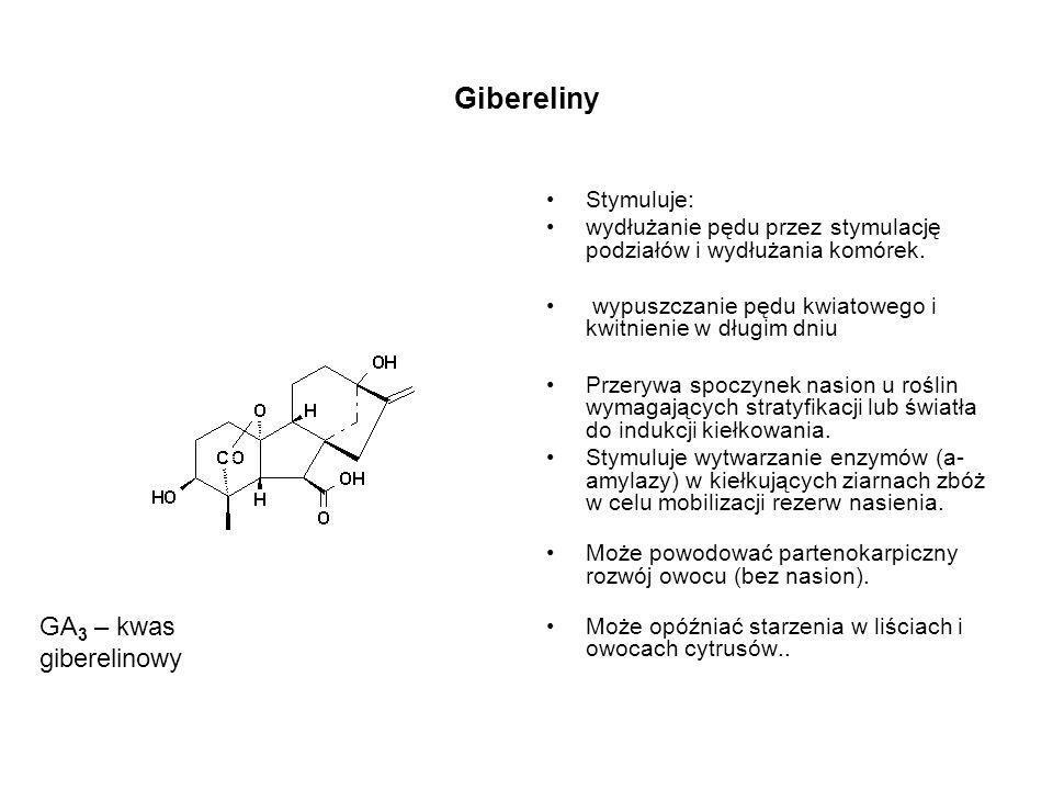 Gibereliny GA3 – kwas giberelinowy Stymuluje: