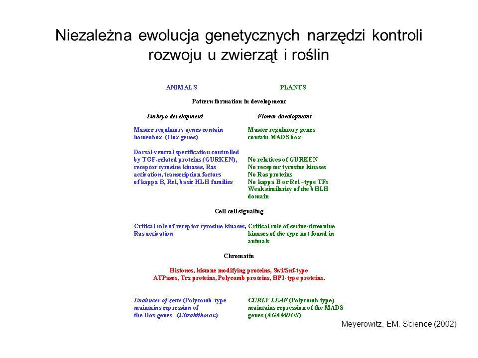 Niezależna ewolucja genetycznych narzędzi kontroli rozwoju u zwierząt i roślin