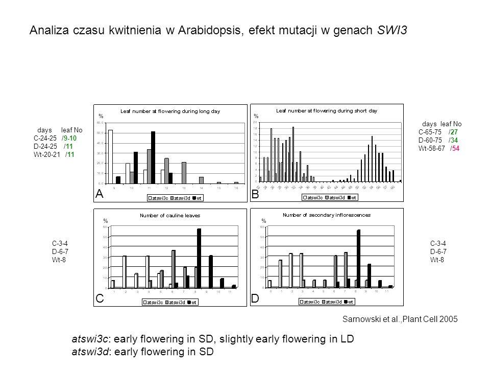 Analiza czasu kwitnienia w Arabidopsis, efekt mutacji w genach SWI3