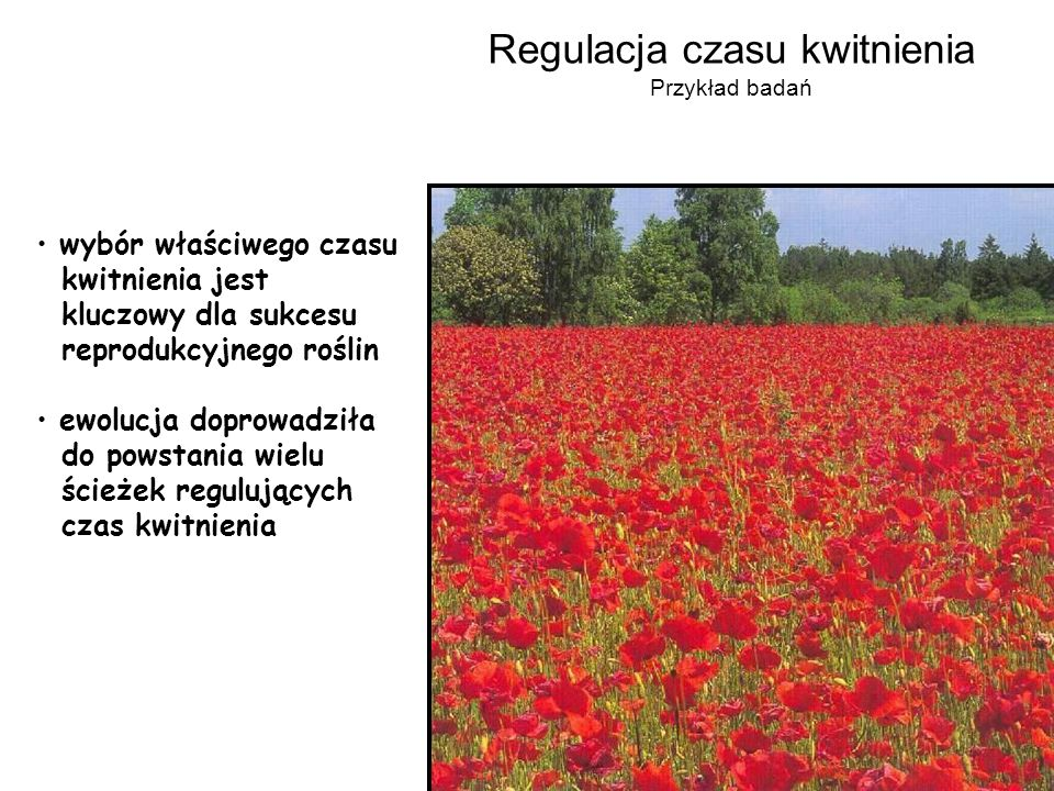 Regulacja czasu kwitnienia