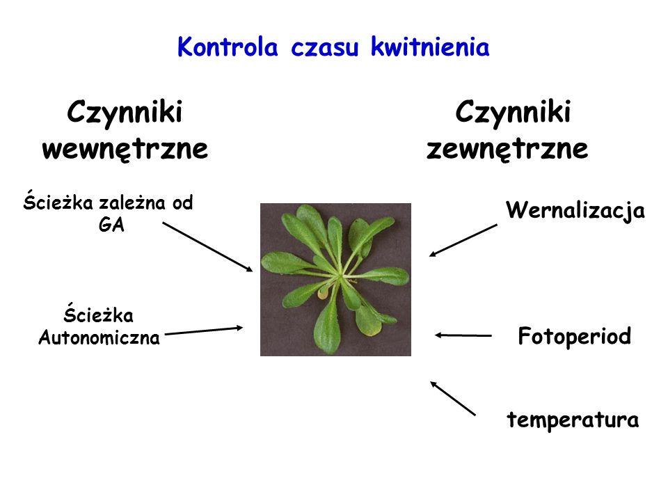 Kontrola czasu kwitnienia