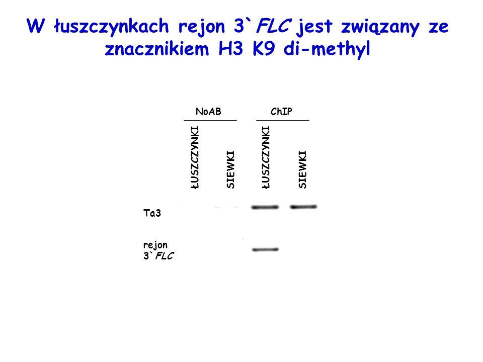 W łuszczynkach rejon 3`FLC jest związany ze znacznikiem H3 K9 di-methyl