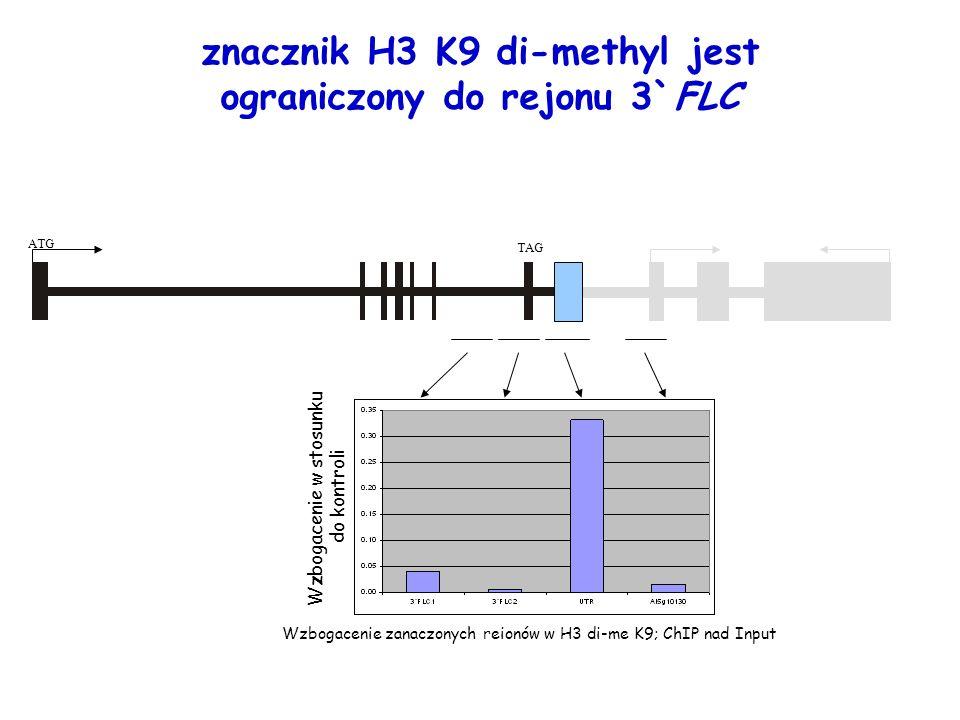 znacznik H3 K9 di-methyl jest ograniczony do rejonu 3`FLC
