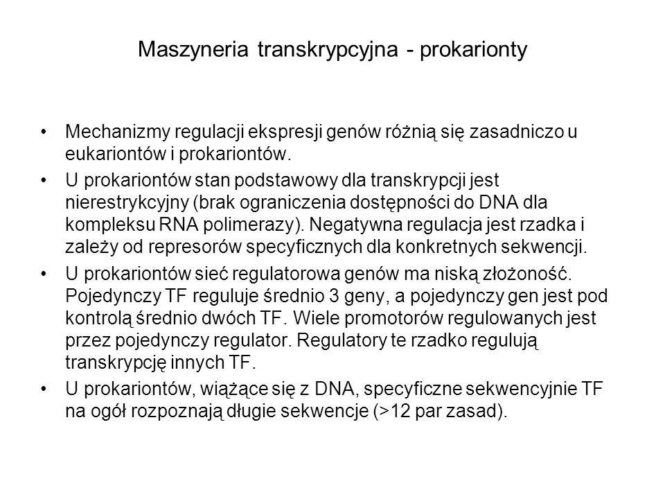 Maszyneria transkrypcyjna - prokarionty