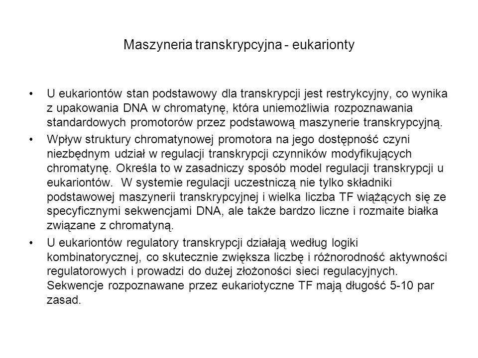 Maszyneria transkrypcyjna - eukarionty