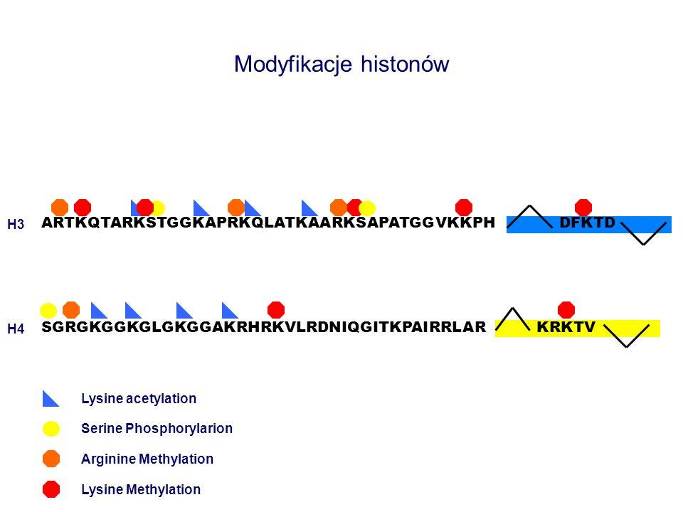 Modyfikacje histonów ARTKQTARKSTGGKAPRKQLATKAARKSAPATGGVKKPH DFKTD