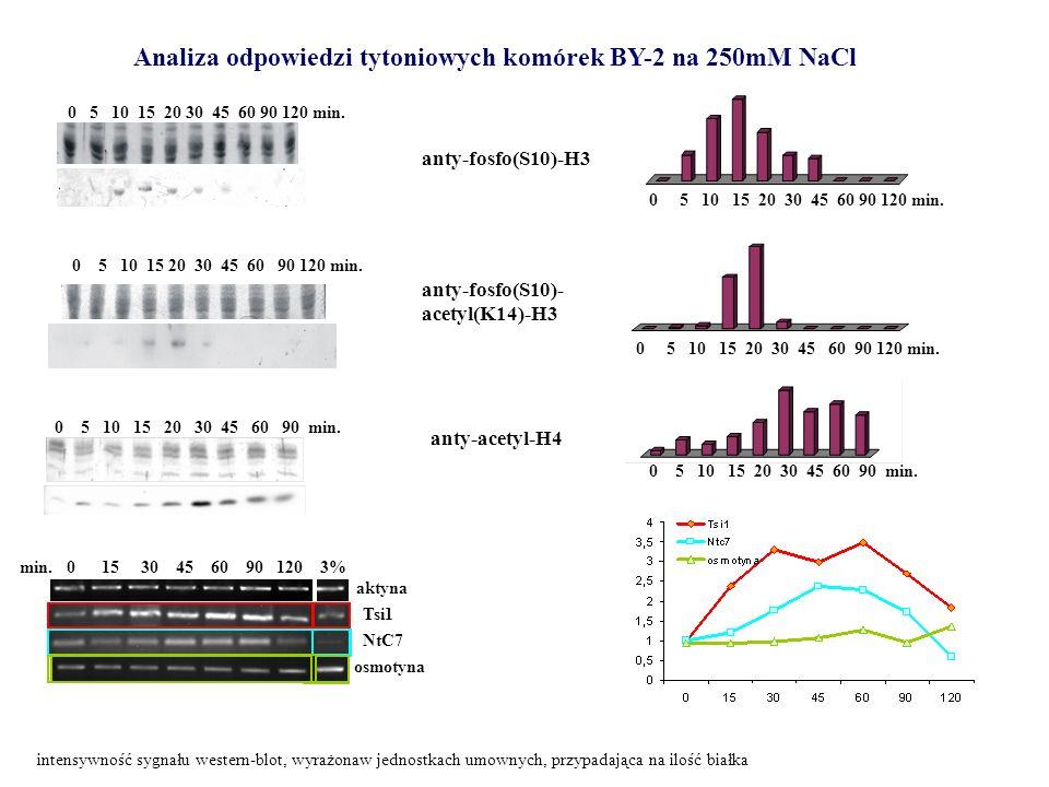 Analiza odpowiedzi tytoniowych komórek BY-2 na 250mM NaCl