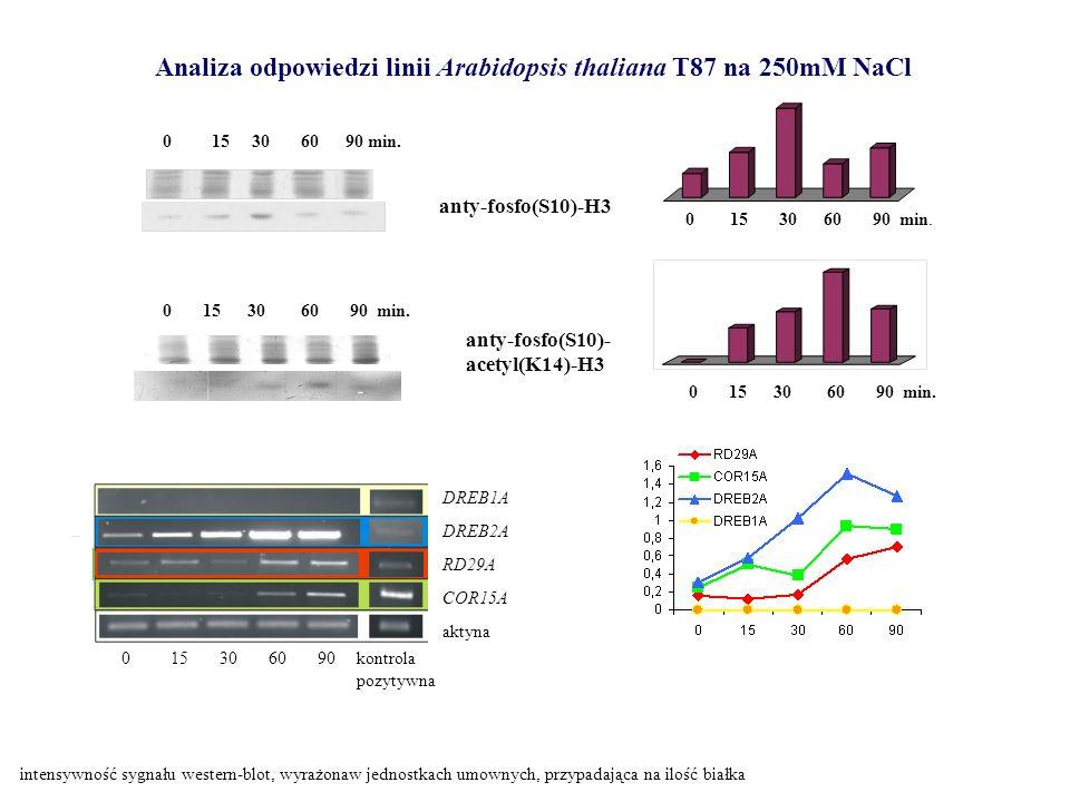 Analiza odpowiedzi linii Arabidopsis thaliana T87 na 250mM NaCl