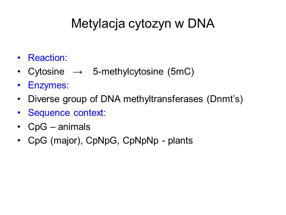 Metylacja cytozyn w DNA