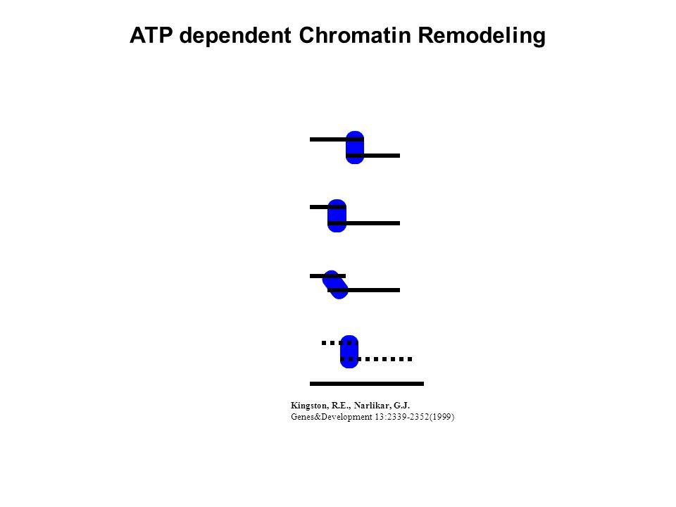 ATP dependent Chromatin Remodeling