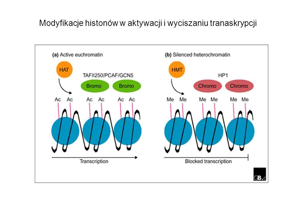 Modyfikacje histonów w aktywacji i wyciszaniu tranaskrypcji