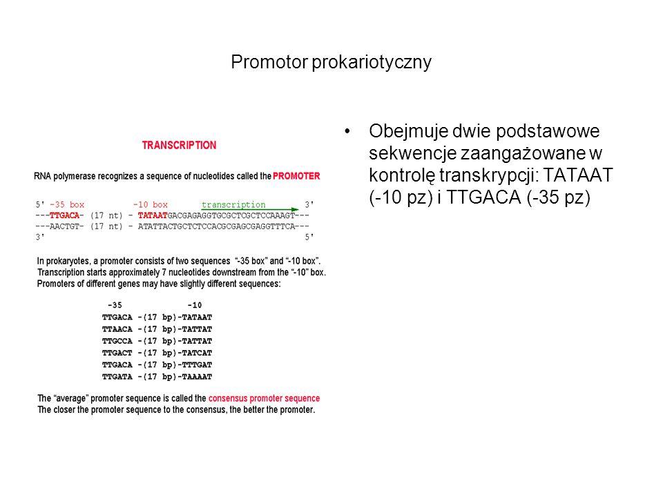 Promotor prokariotyczny