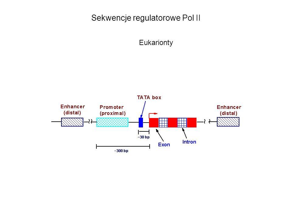 Sekwencje regulatorowe Pol II