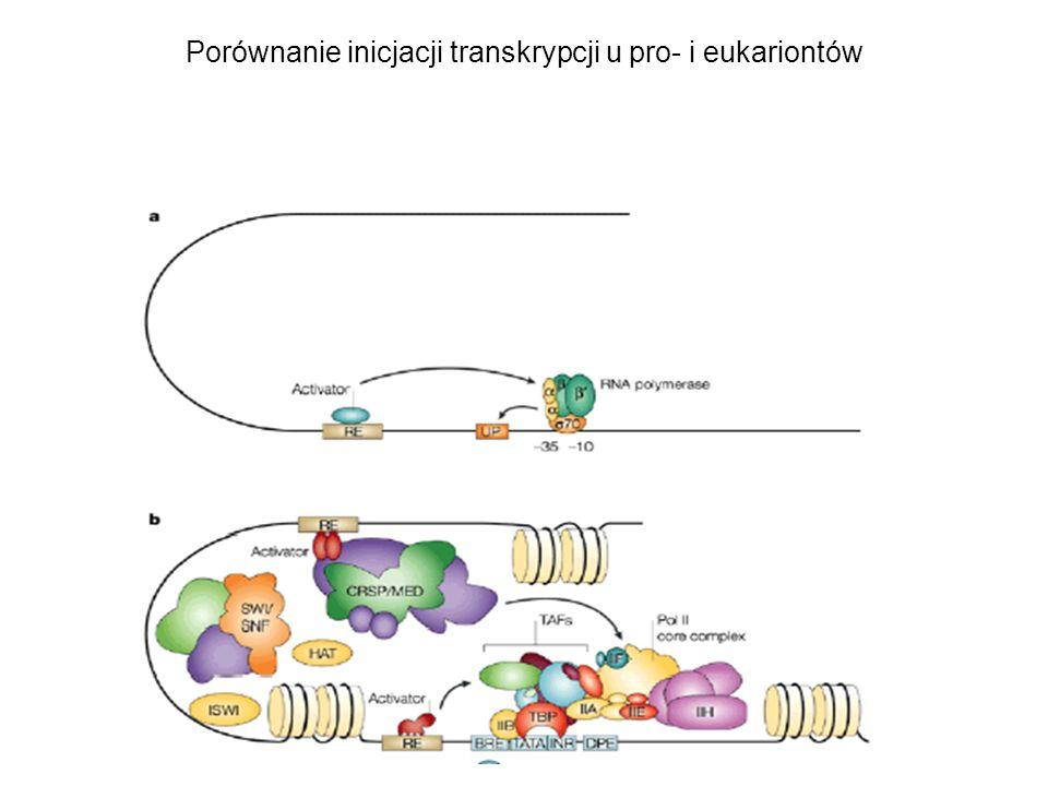 Porównanie inicjacji transkrypcji u pro- i eukariontów