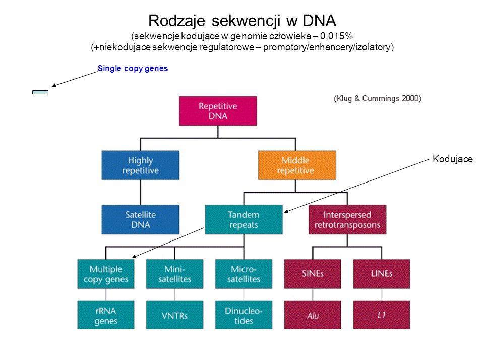 Rodzaje sekwencji w DNA (sekwencje kodujące w genomie człowieka – 0,015% (+niekodujące sekwencje regulatorowe – promotory/enhancery/izolatory)