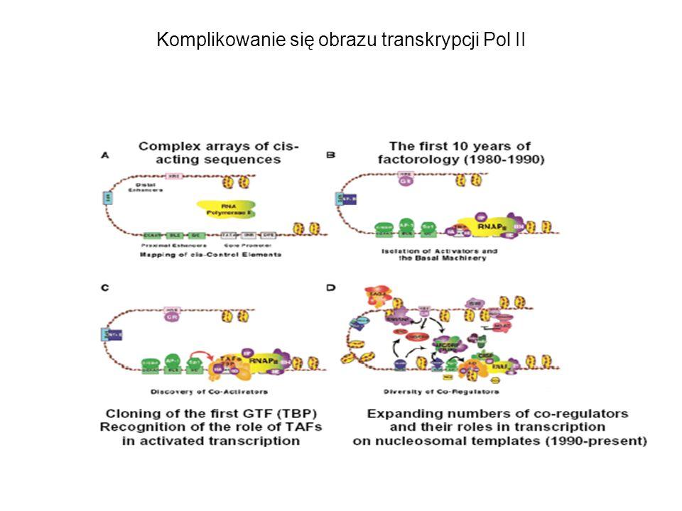 Komplikowanie się obrazu transkrypcji Pol II
