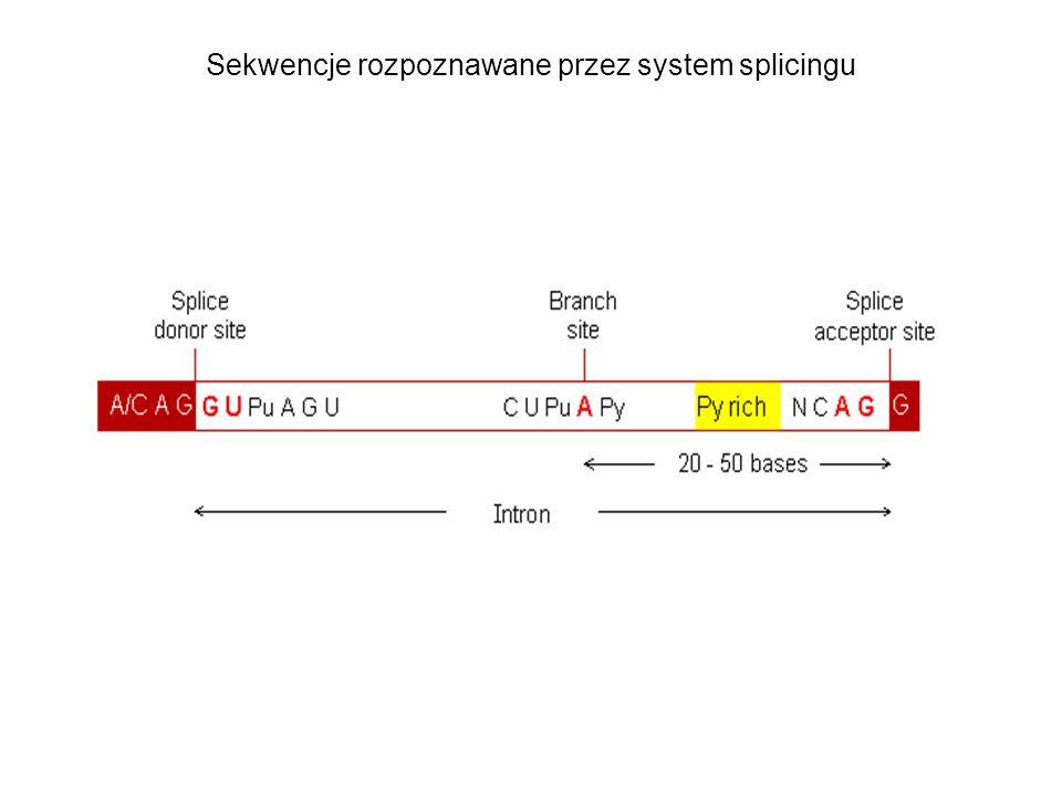 Sekwencje rozpoznawane przez system splicingu
