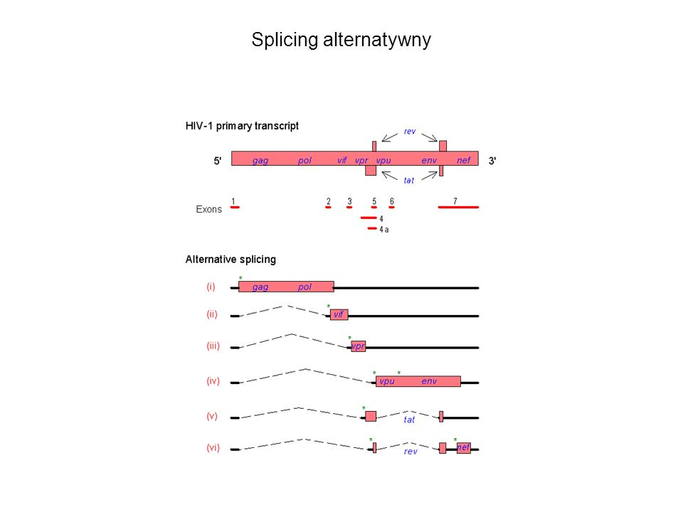 Splicing alternatywny