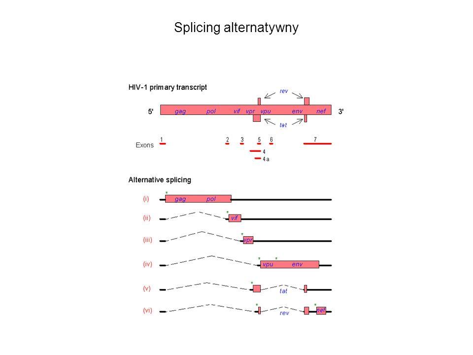 Splicing alternatywny