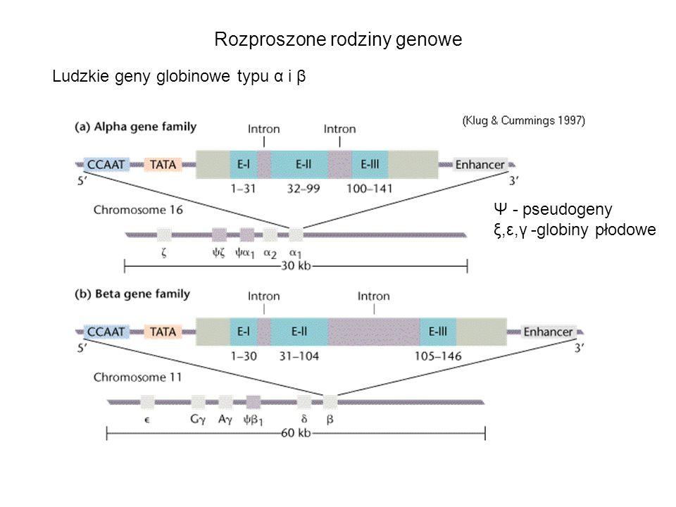 Rozproszone rodziny genowe