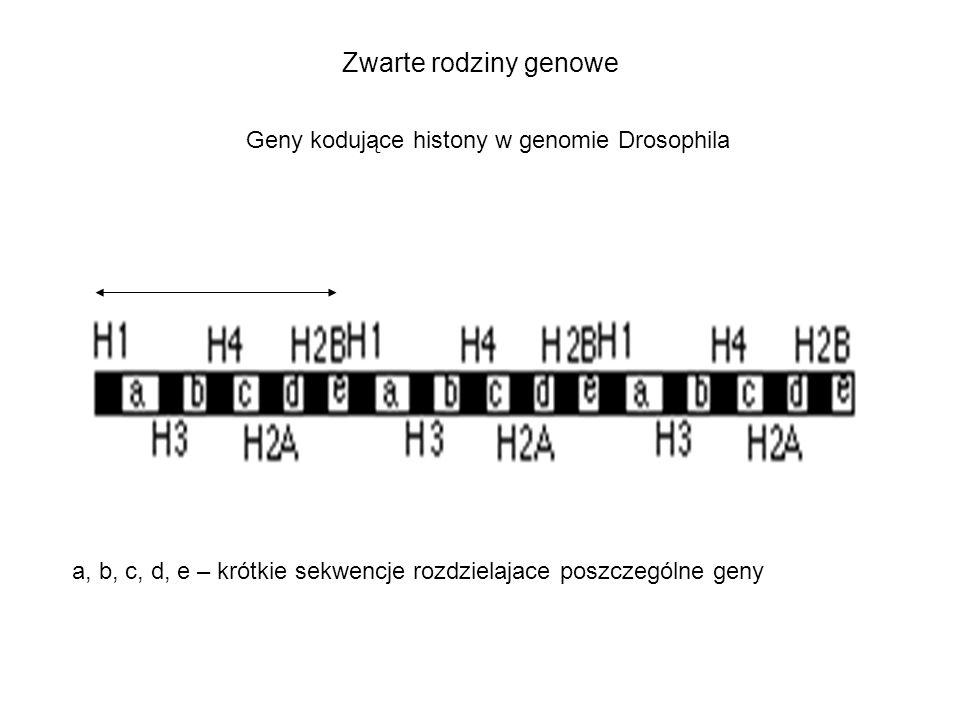 Zwarte rodziny genowe Geny kodujące histony w genomie Drosophila
