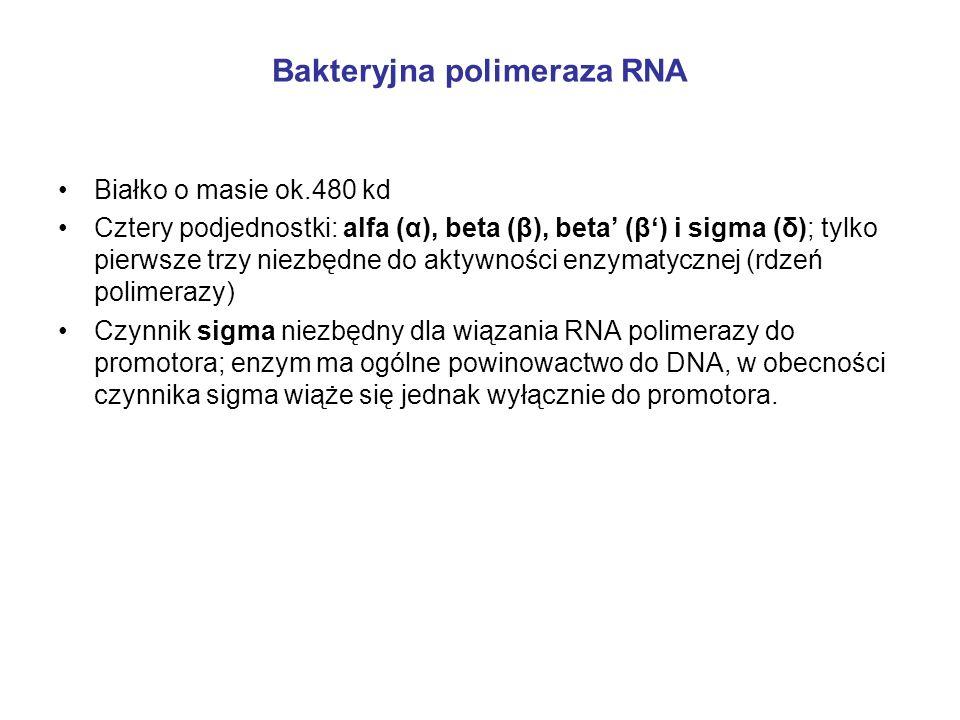 Bakteryjna polimeraza RNA