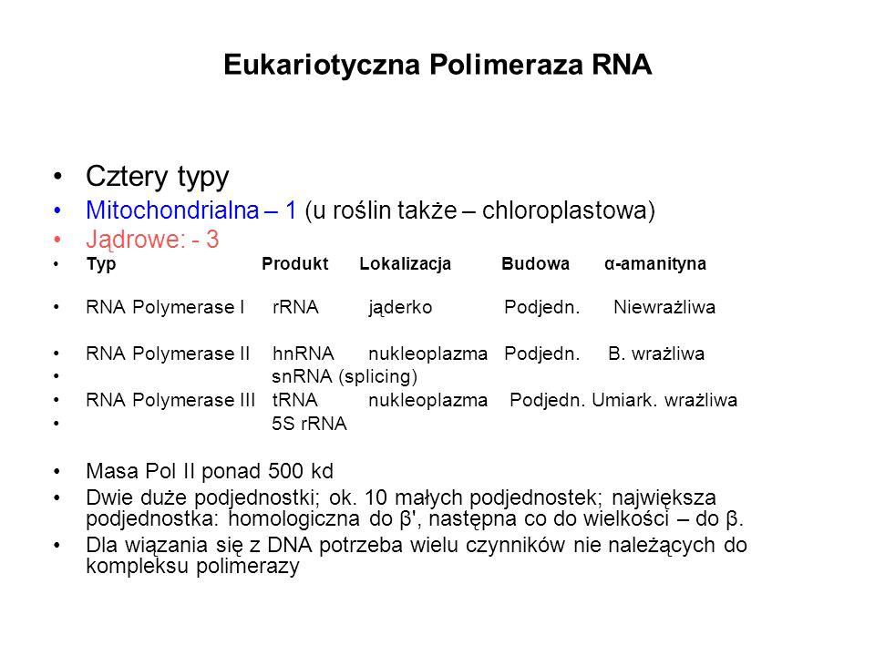 Eukariotyczna Polimeraza RNA