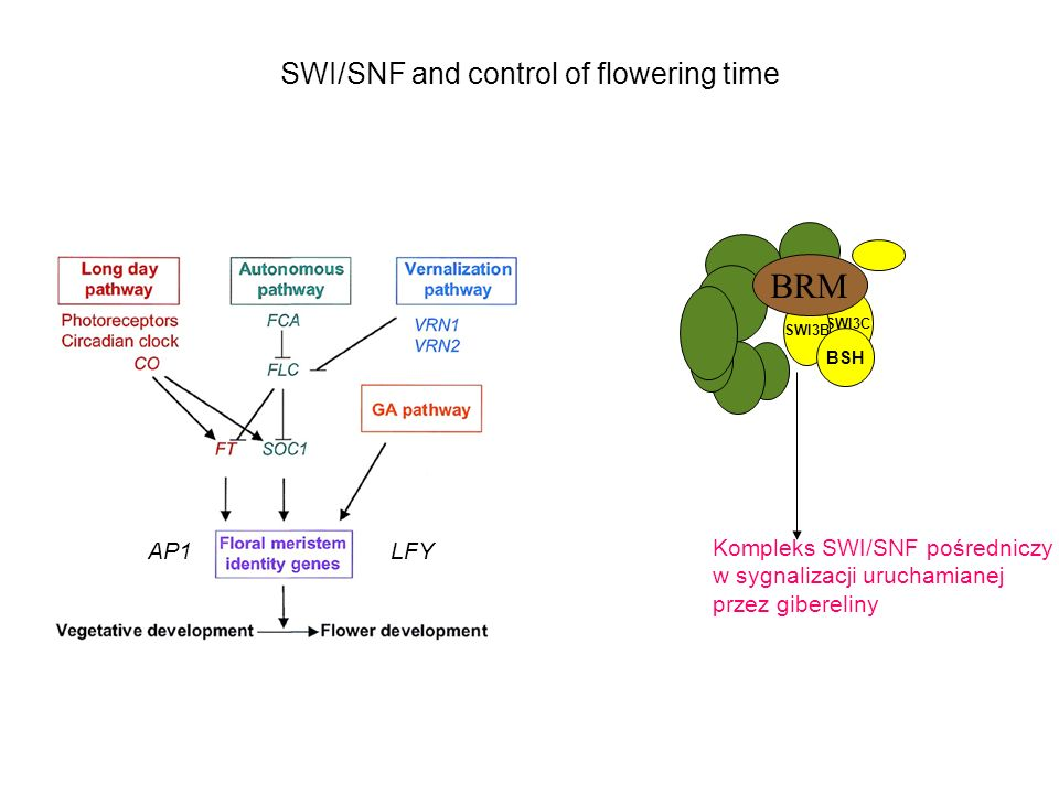 SWI/SNF and control of flowering time