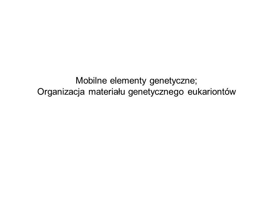 Mobilne elementy genetyczne; Organizacja materiału genetycznego eukariontów