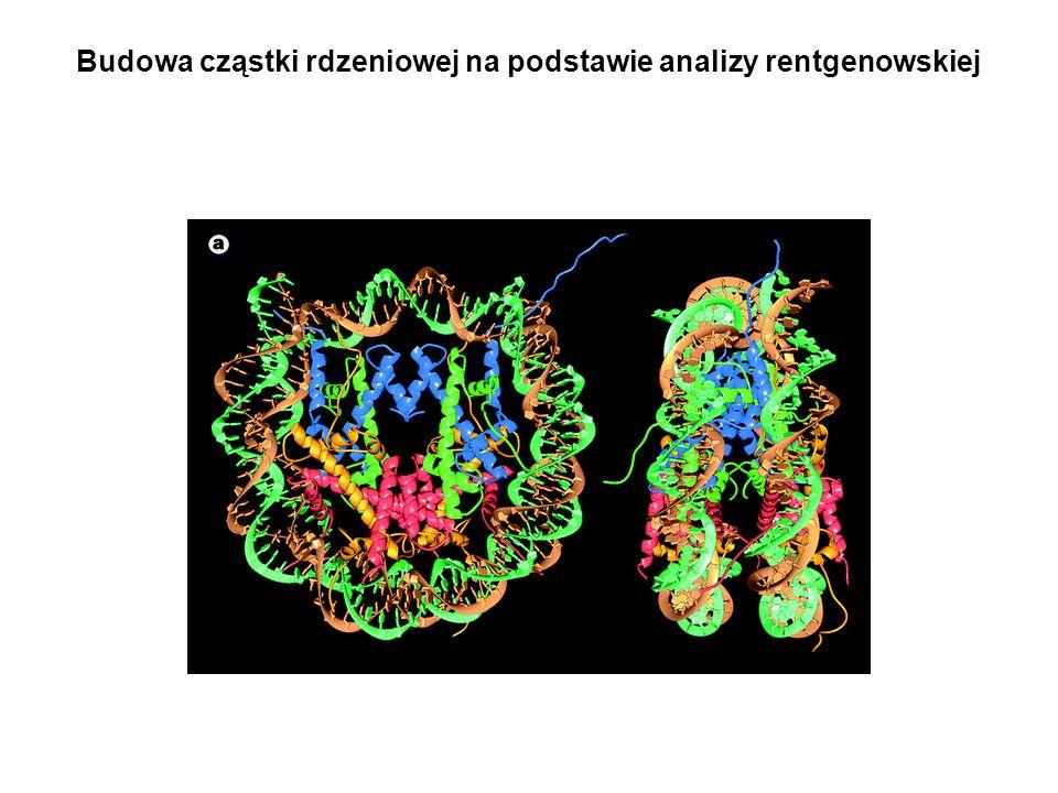 Budowa cząstki rdzeniowej na podstawie analizy rentgenowskiej