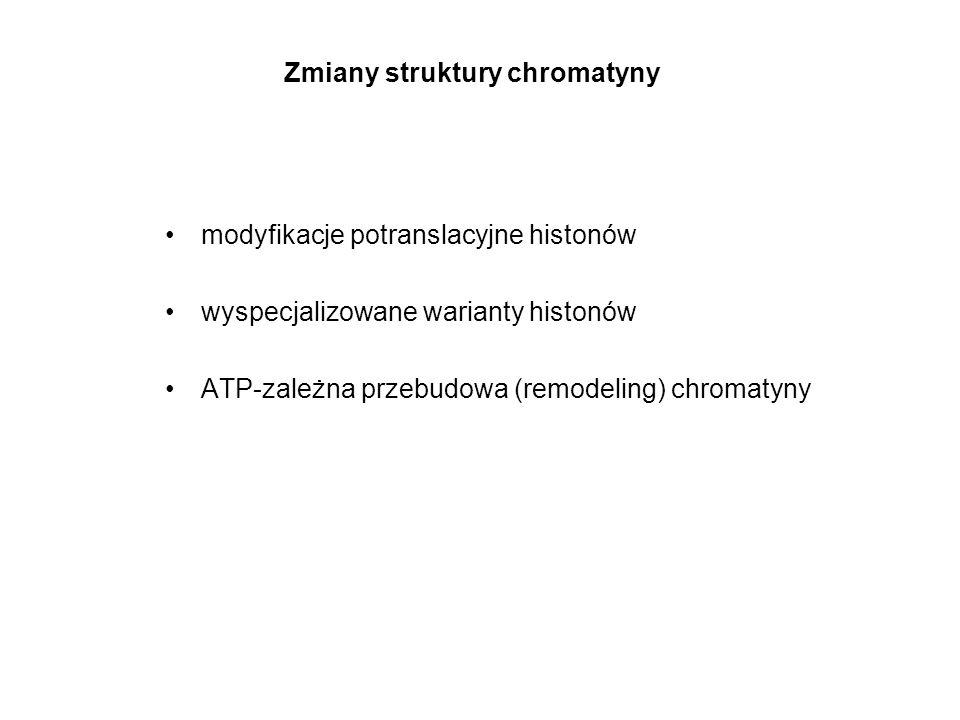 Zmiany struktury chromatyny