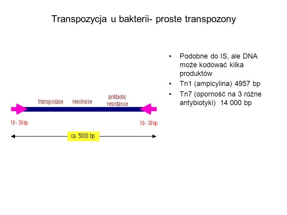 Transpozycja u bakterii- proste transpozony