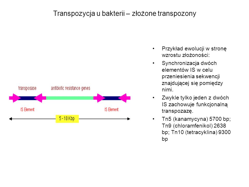 Transpozycja u bakterii – złożone transpozony