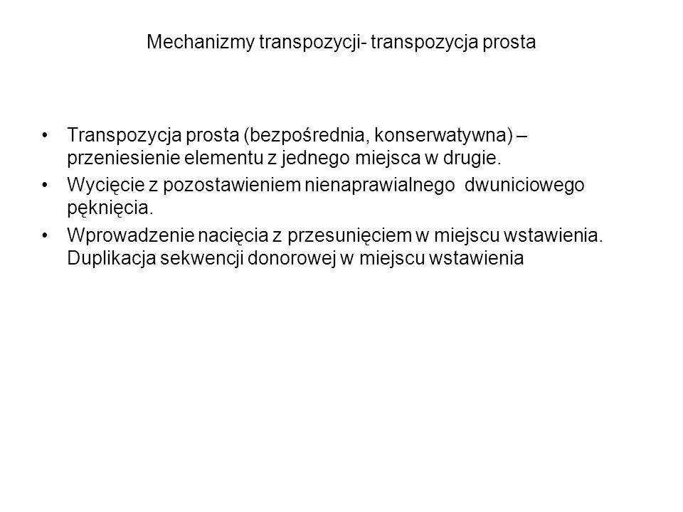 Mechanizmy transpozycji- transpozycja prosta
