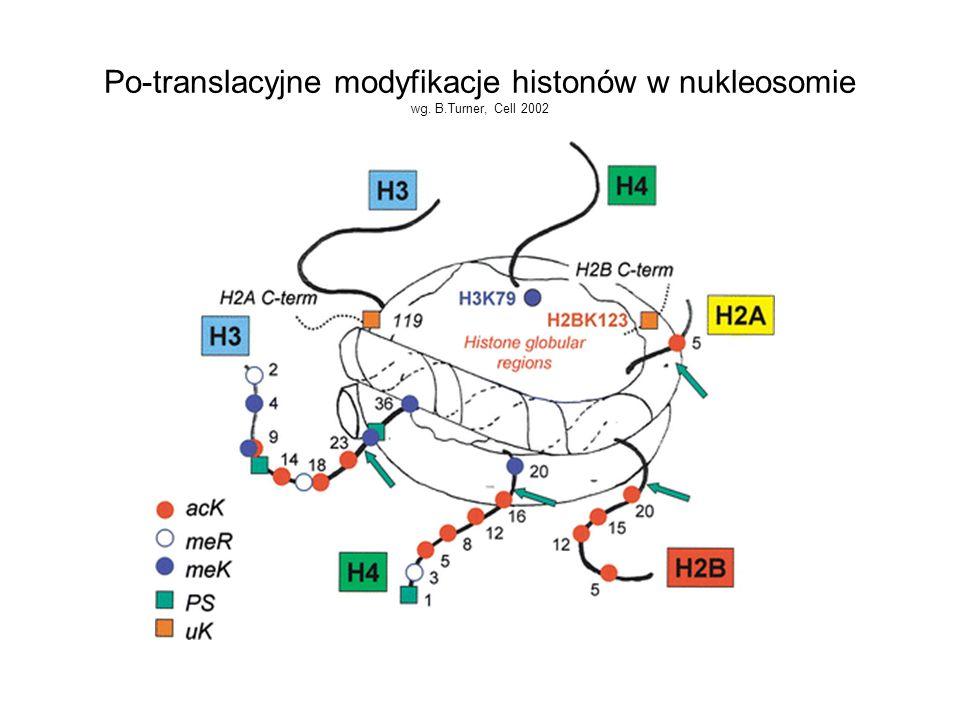 Po-translacyjne modyfikacje histonów w nukleosomie wg. B