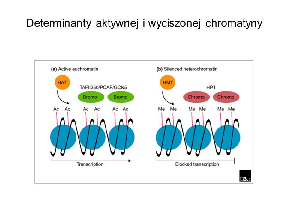Determinanty aktywnej i wyciszonej chromatyny
