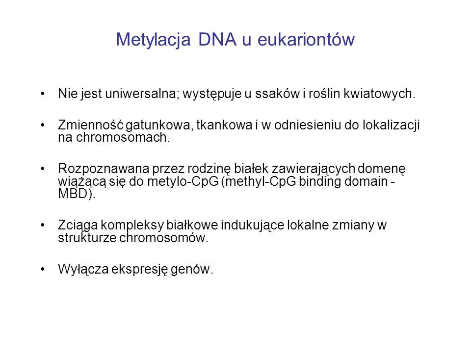 Metylacja DNA u eukariontów
